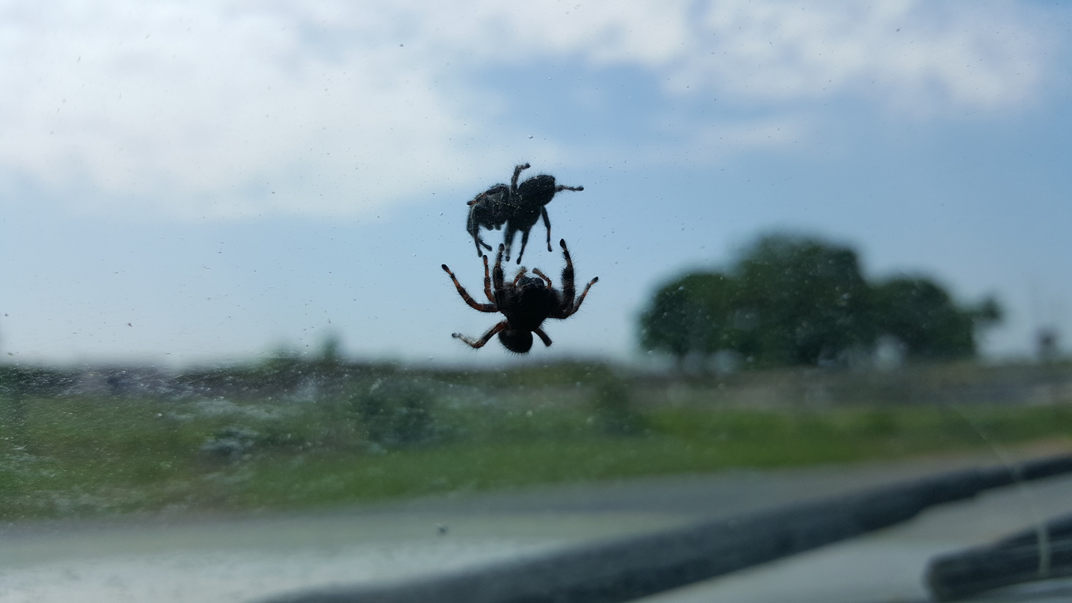 Spider Fight through Glass by Thomas Schnell