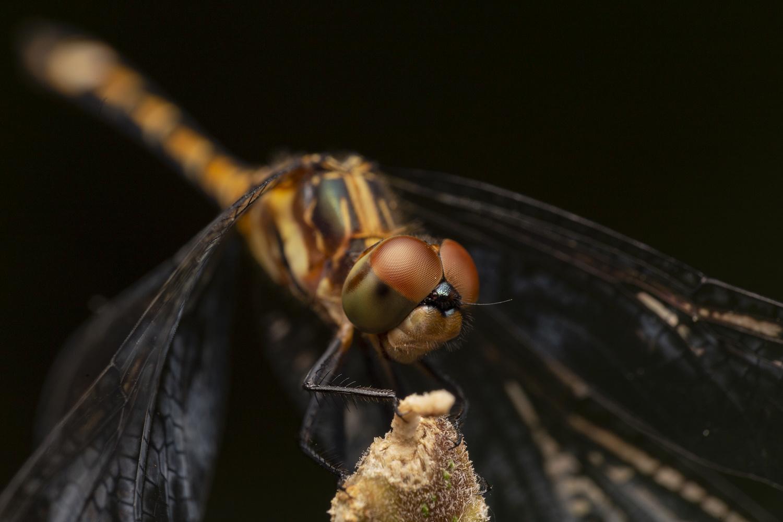Dragonfly by Cynthia Bandurek