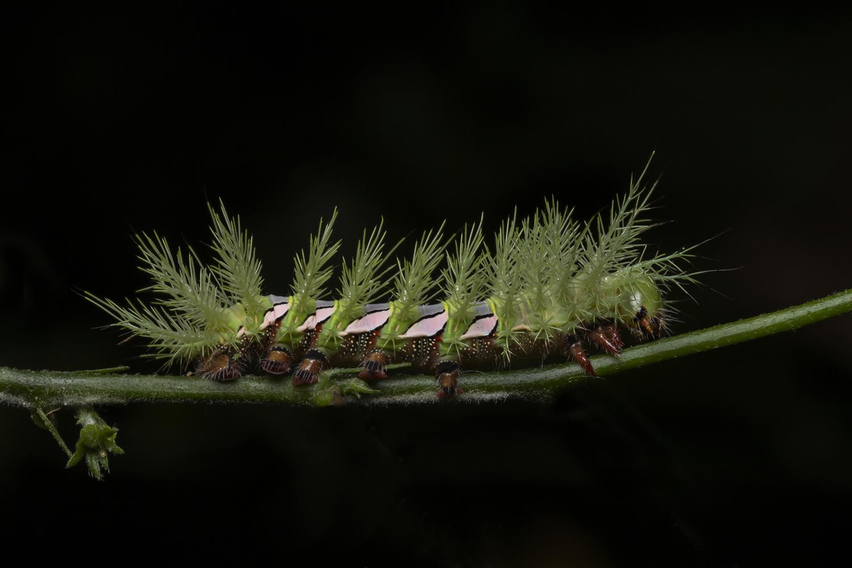 Caterpillar by Cynthia Bandurek