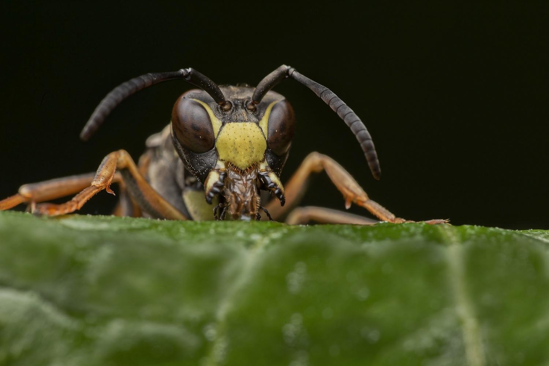 Wasp by Cynthia Bandurek