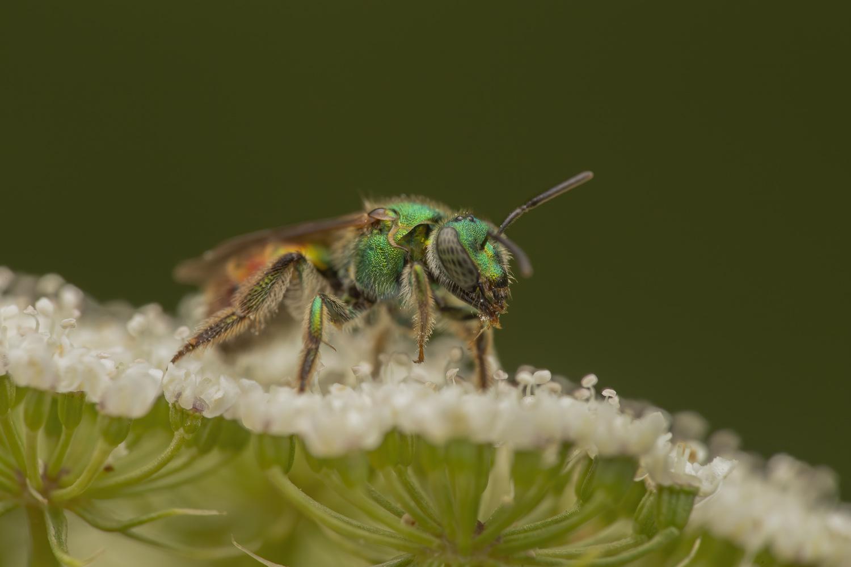 Bee by Cynthia Bandurek