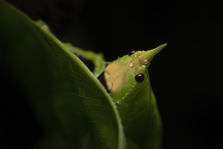 Hidden creatures by Cynthia Bandurek