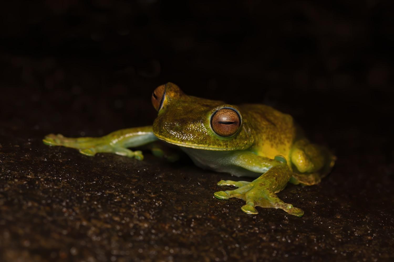 Froggy by Cynthia Bandurek