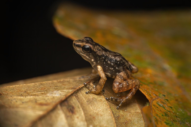 Poison Dart Frog by Cynthia Bandurek