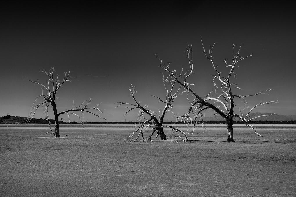 3 Trees by David J. Crewe