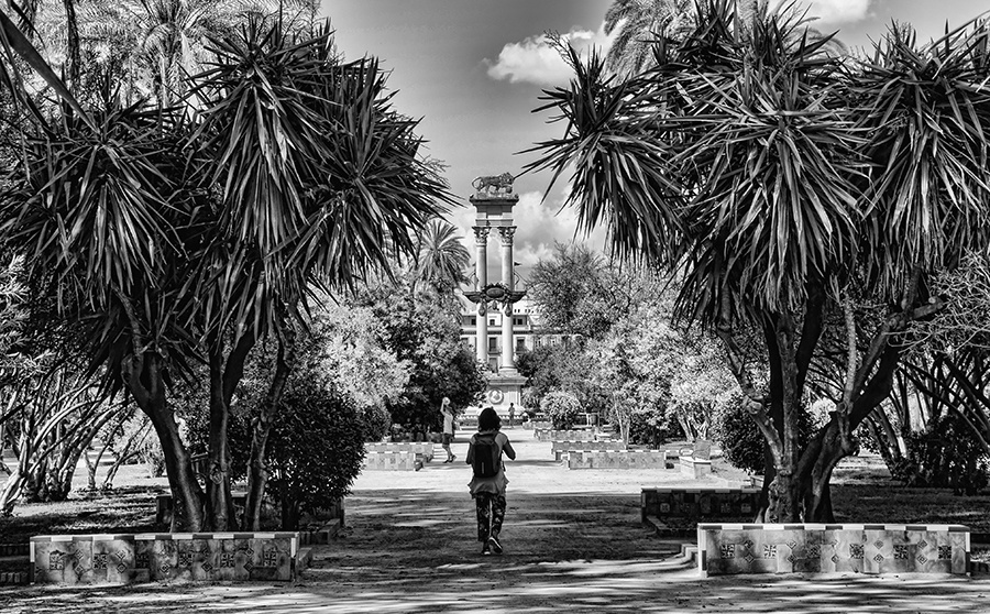 A Sevillian Park by Rod Collett