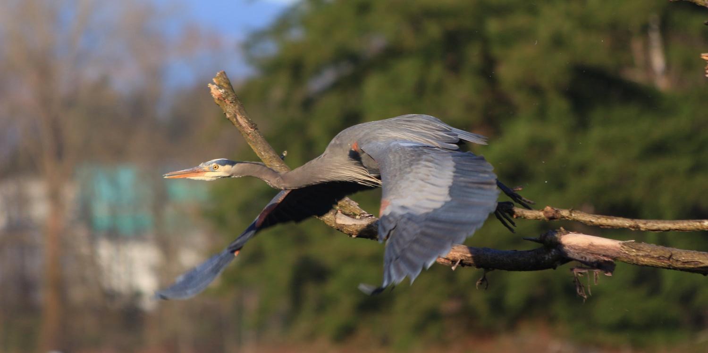 Taking Flight by Mark Ser