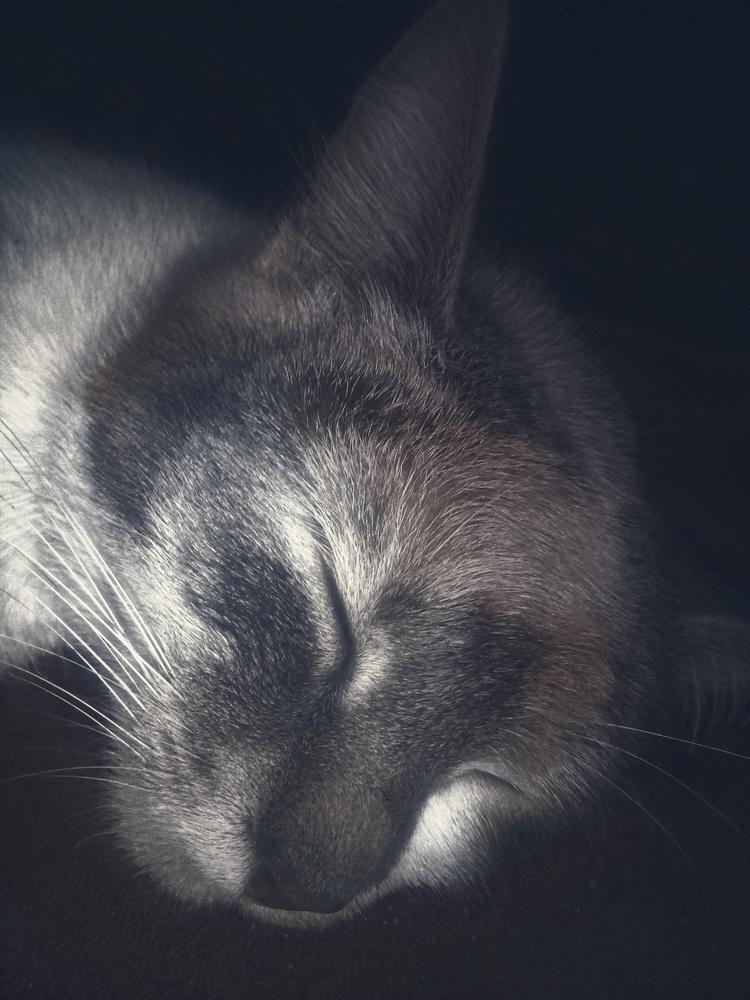 Cat in dark by Dijana Kr