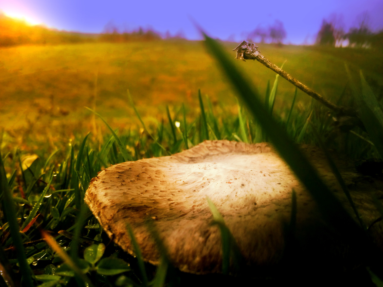 Mushroom is sunset by Dijana Kr
