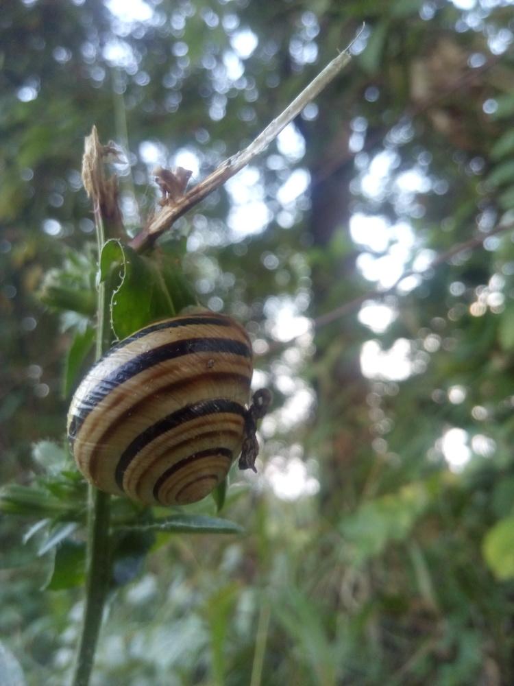 Snail on sprig by Dijana Kr