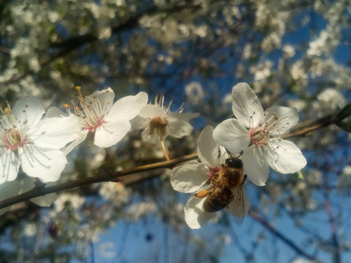Bee on flower by Dijana Kr