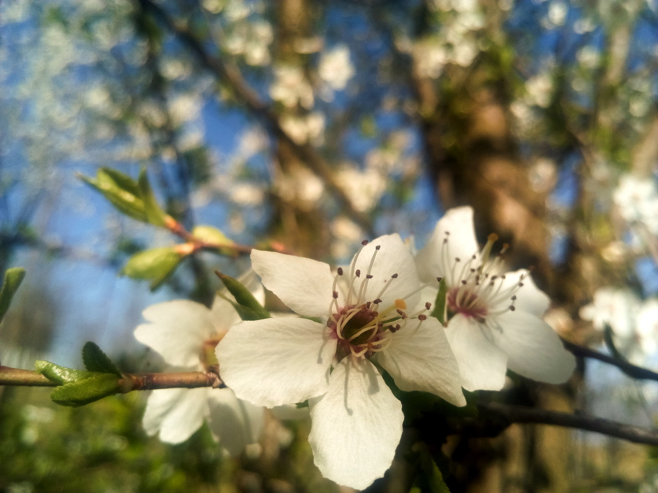 Blossom by Dijana Kr