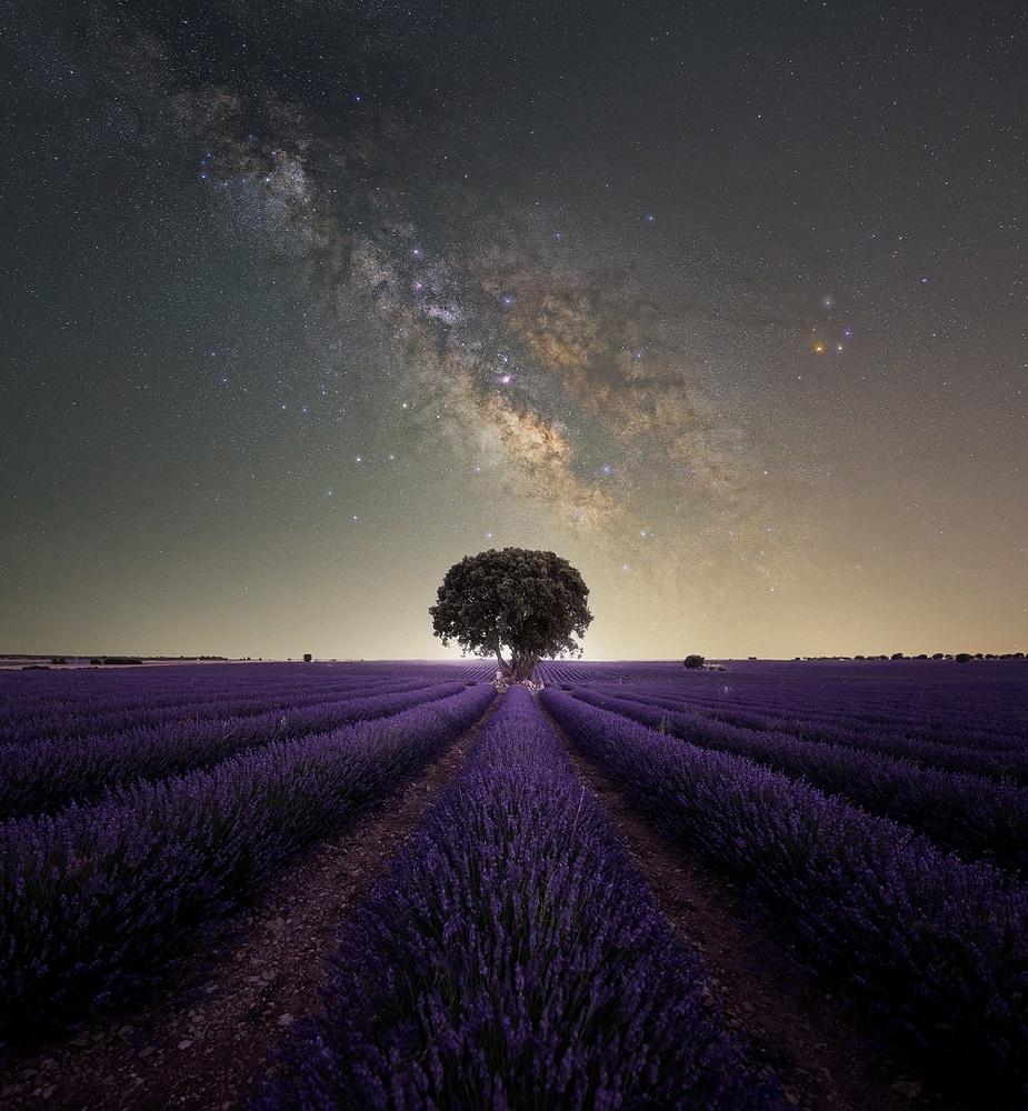 Lavender Nights by Prince Berkoh
