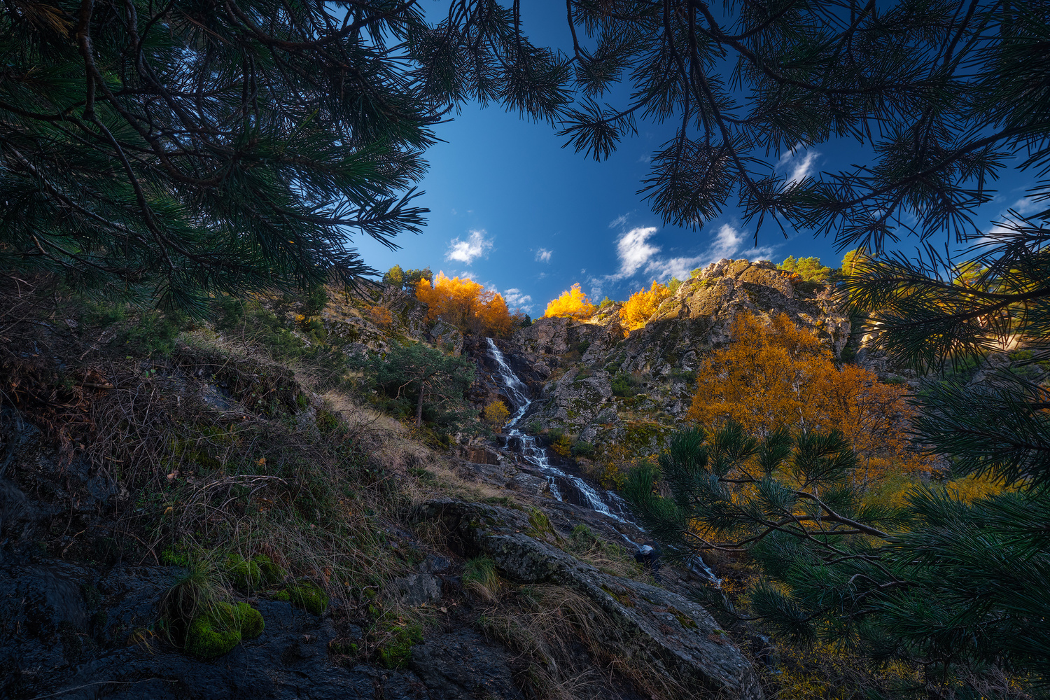 Fall Contrast by Prince Berkoh