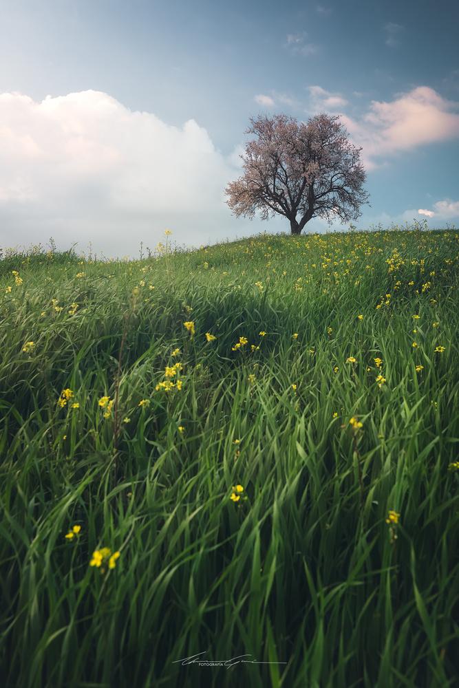 Springtime to come by Manu García