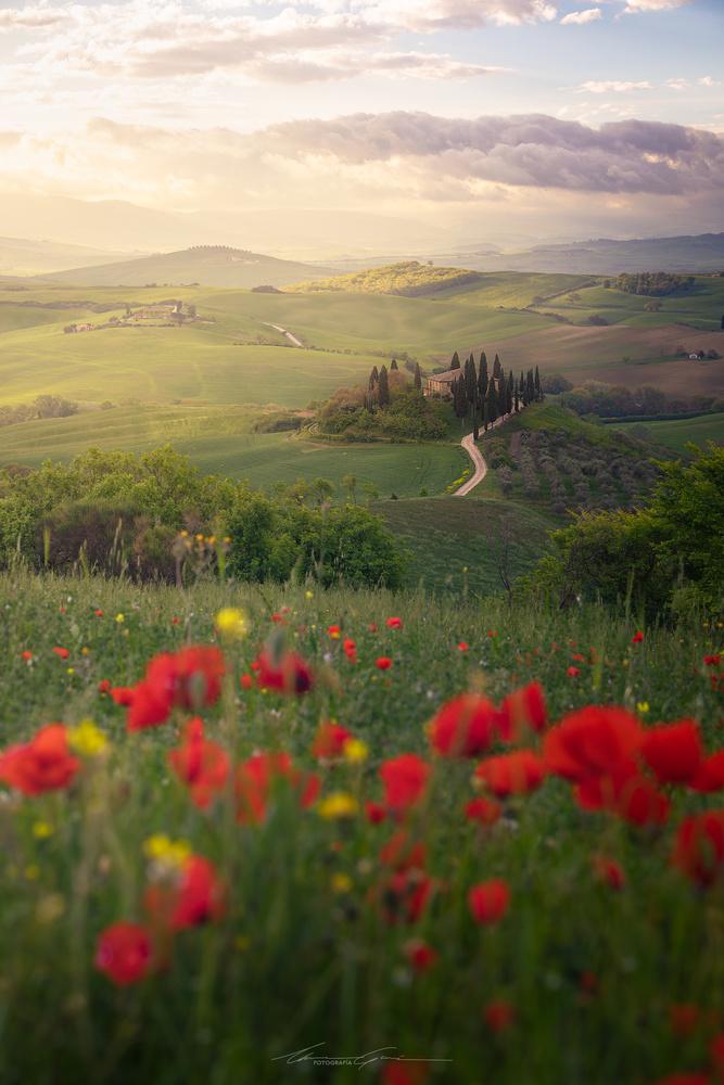 Tuscan Poppies by Manu García