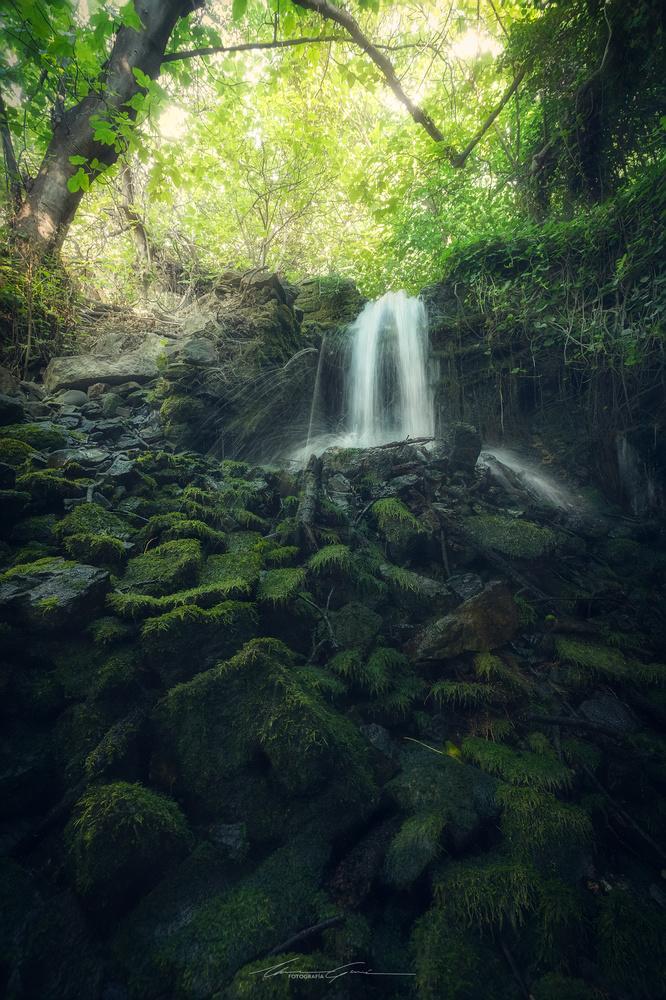 Deep into the jungle by Manu García