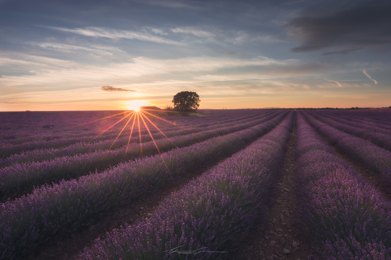 Summer scent by Manu García