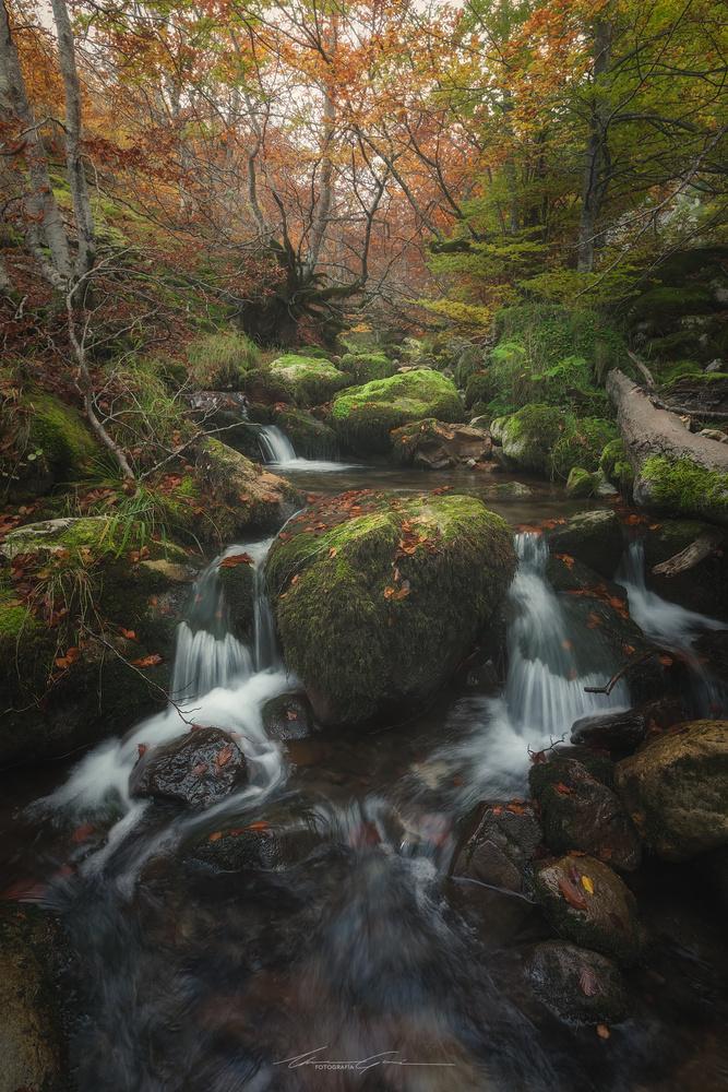 Autumn reverie by Manu García
