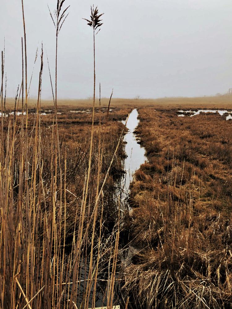 Wetlands #3 by Michael Warner