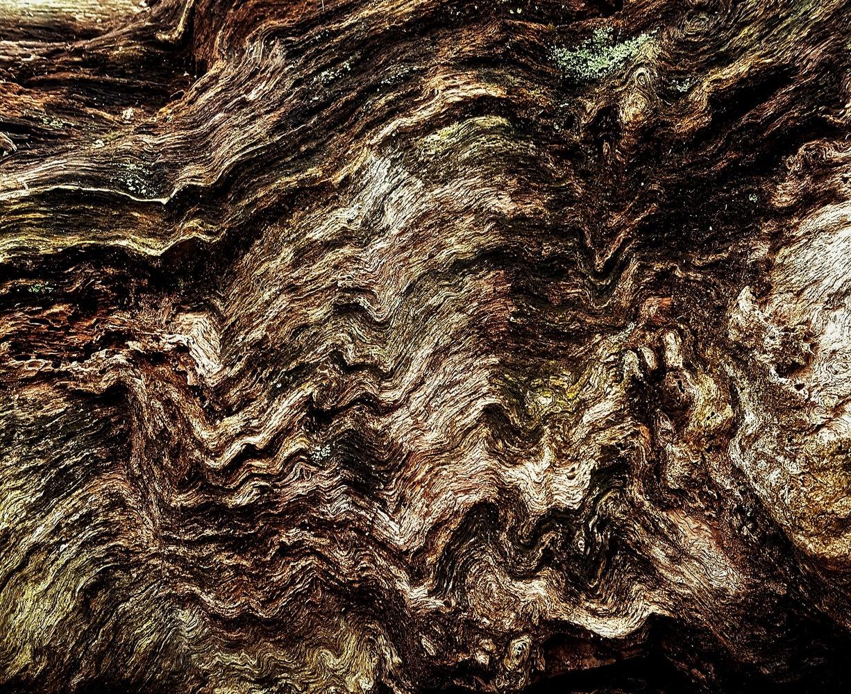 Wood Waves #3 by Michael Warner