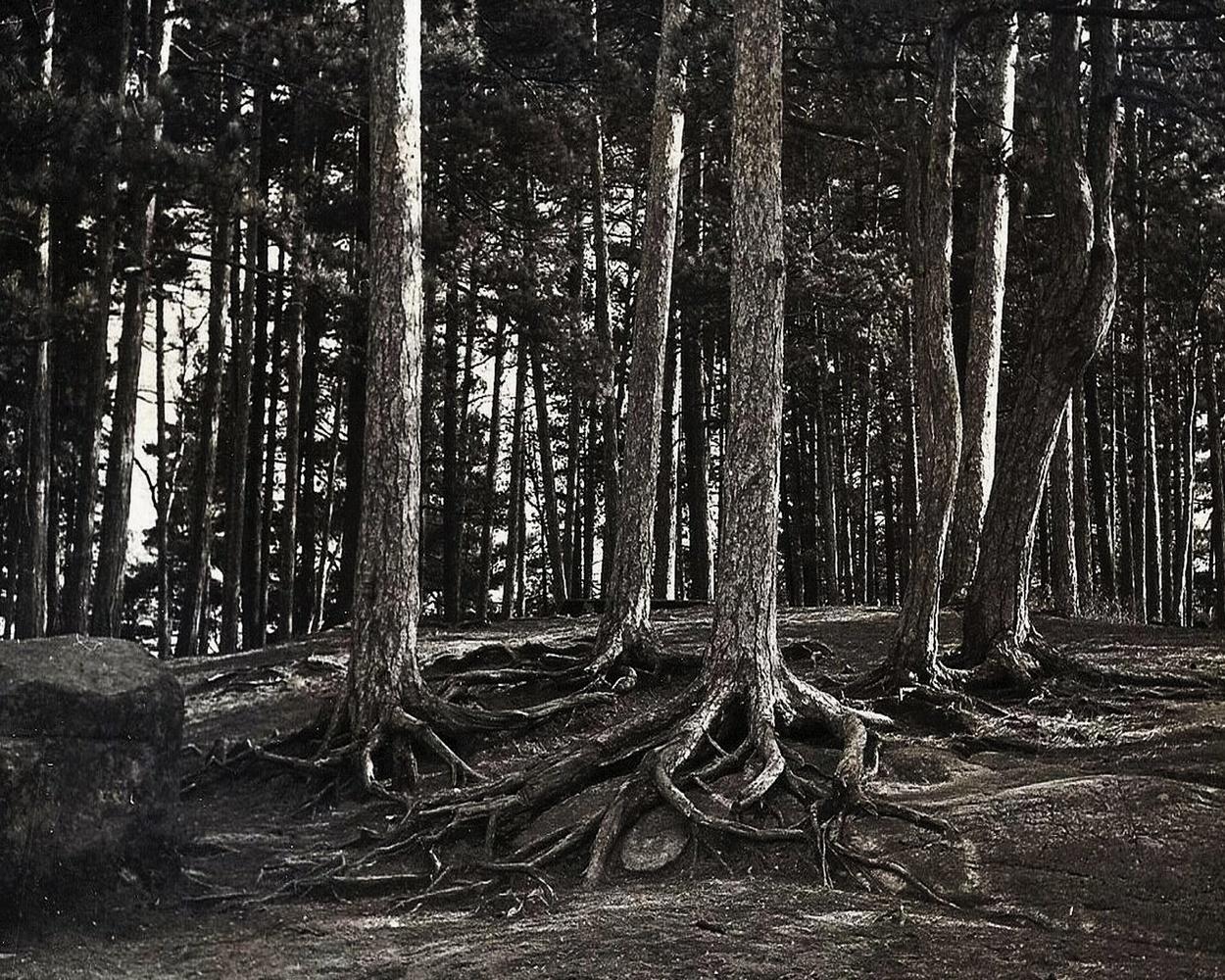 Adirondack Roots by Michael Warner
