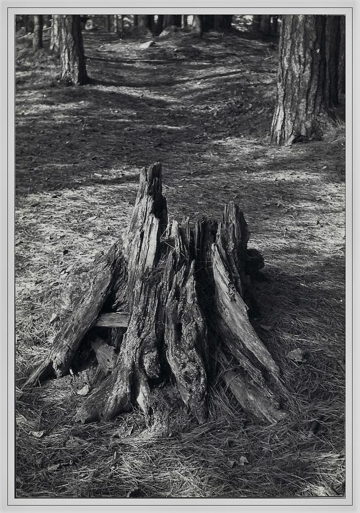Beautiful Stump by Michael Warner