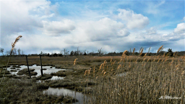 Marsh Under Clouds #4 by Michael Warner