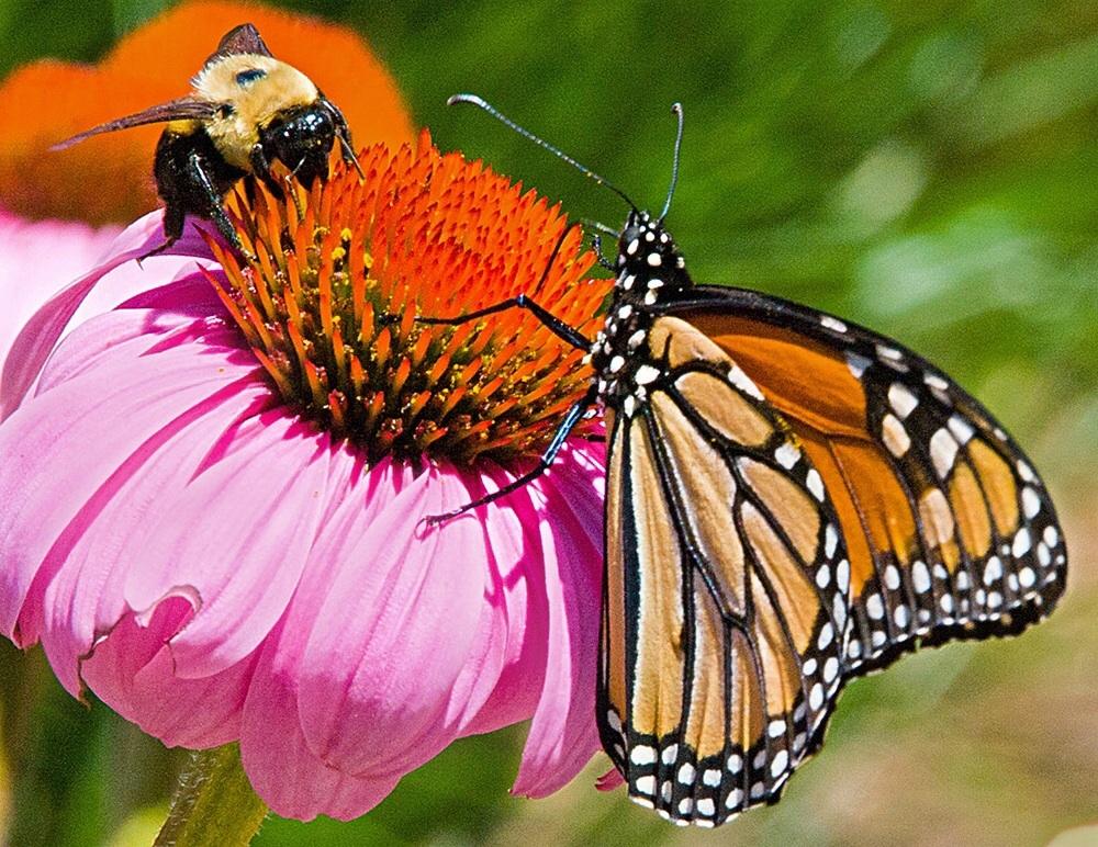 Bee & butterfly by Bern Gell.