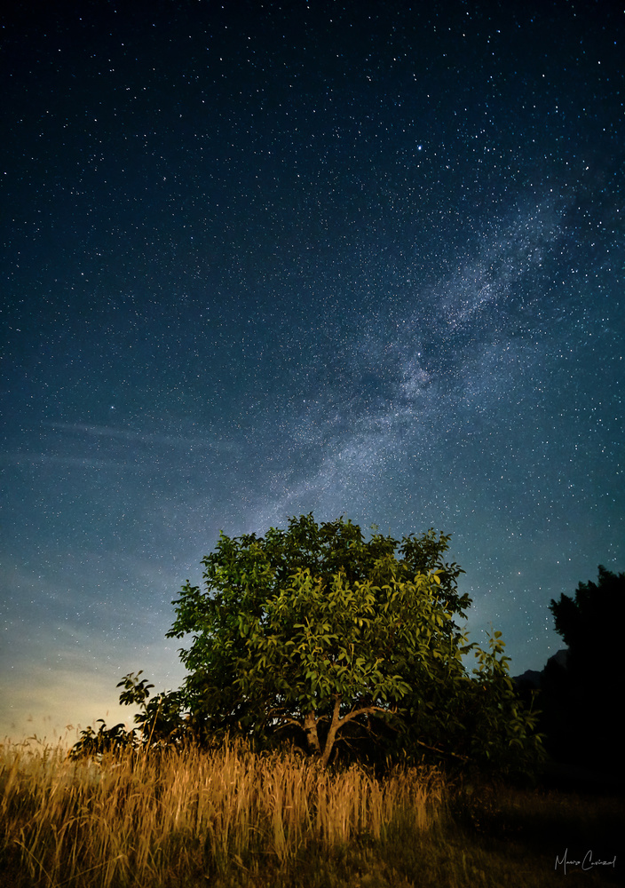 Lonely Tree by Mauro Caviezel