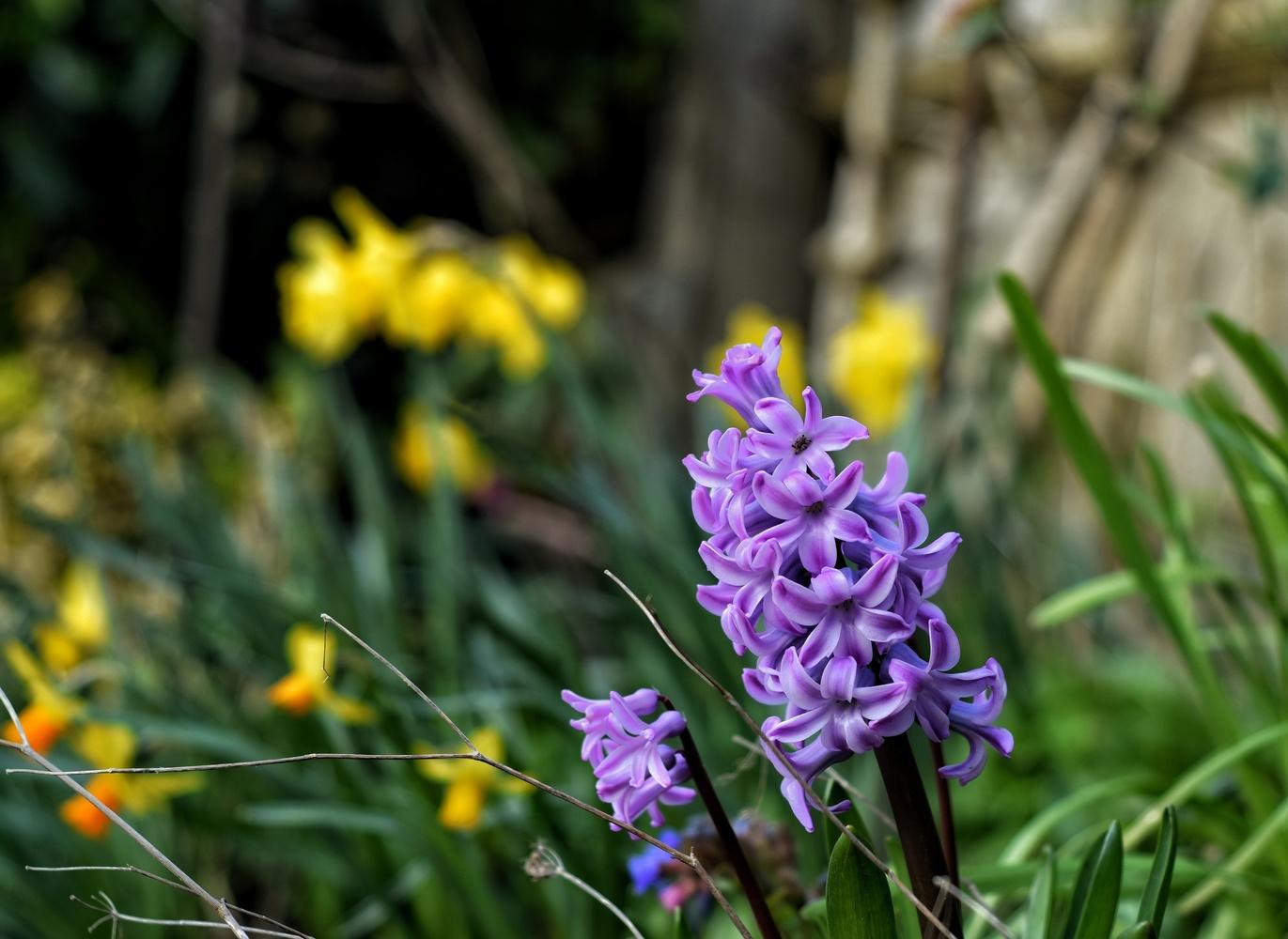 Flowers by Callum Tiney