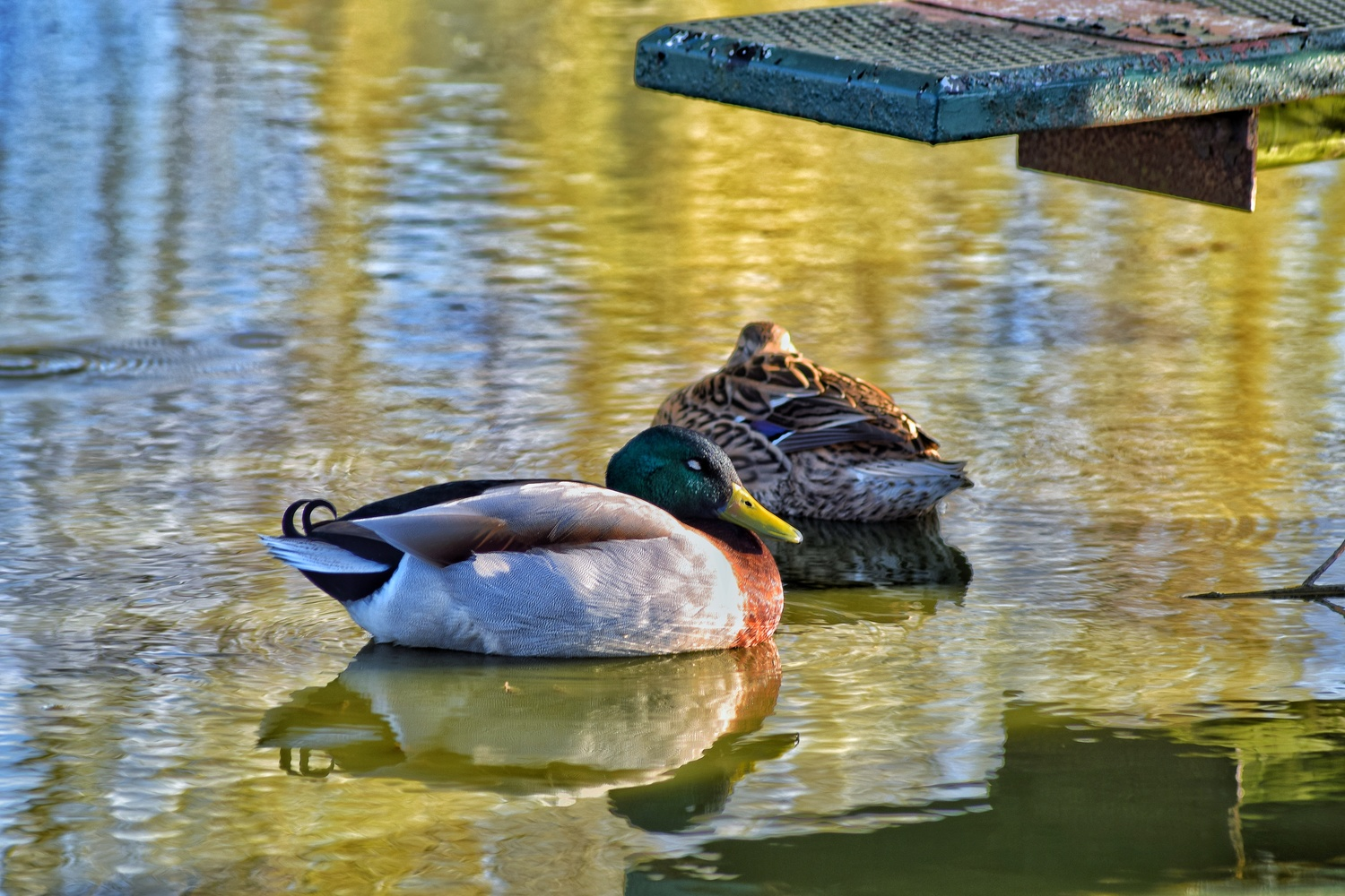 Double Duck by Callum Tiney