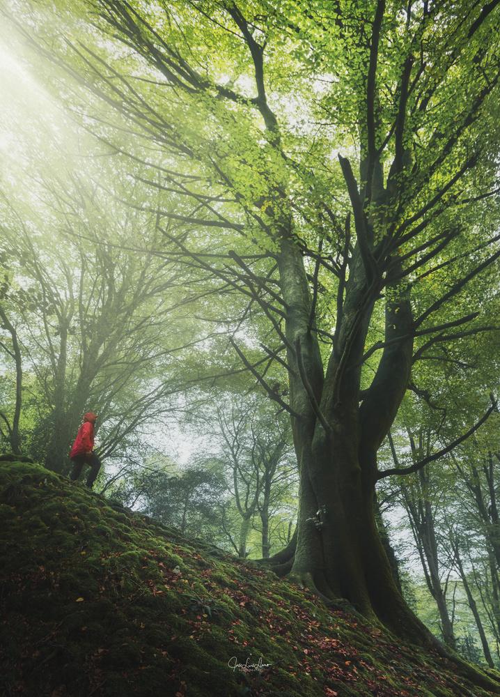 Walking among giants. by Jose Luis Llano