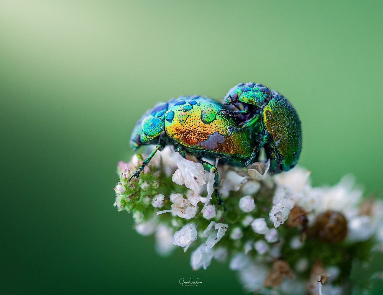 Love is in the air! by Jose Luis Llano