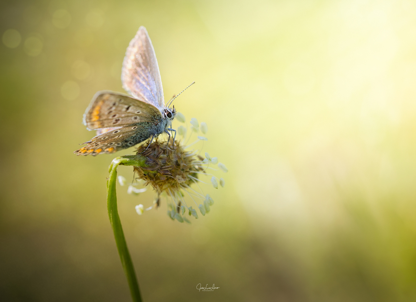 Lady butterfly by Jose Luis Llano