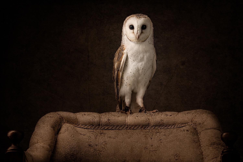 Barn Owl by Darren Smith