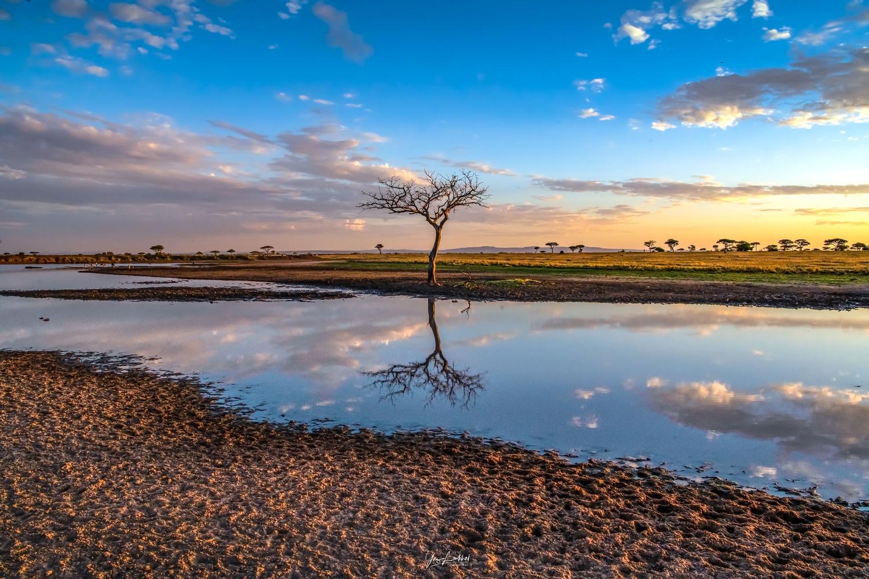 Lone tree by Yaz Loukhal