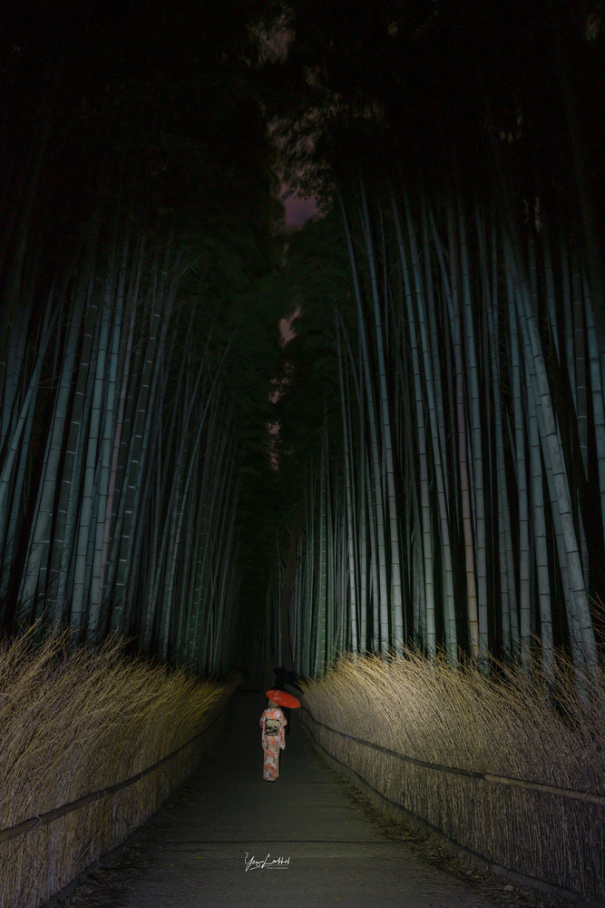 Bamboo Forest at dusk by Yaz Loukhal