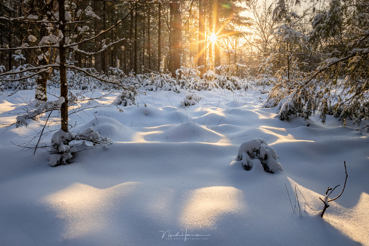 Warm light on a winters day by Nando Harmsen