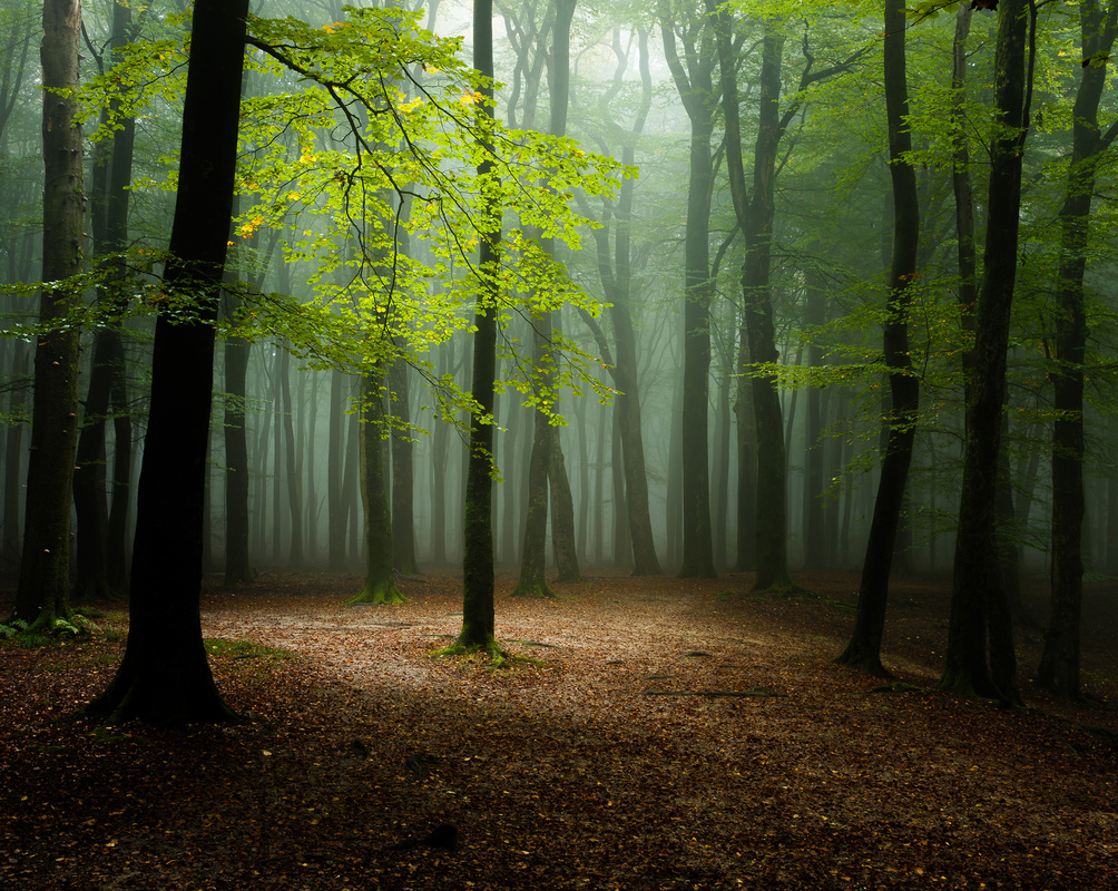 Forest light by Nando Harmsen