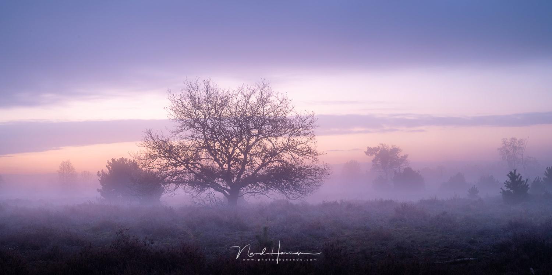 Morning twilight by Nando Harmsen