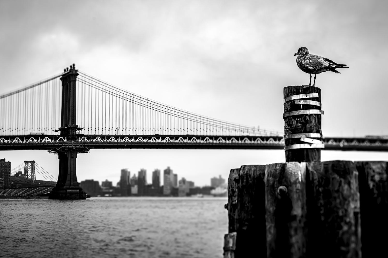 """""""Bird's eye perspective on Manhattan Bridge"""" by Tobi Dür"""
