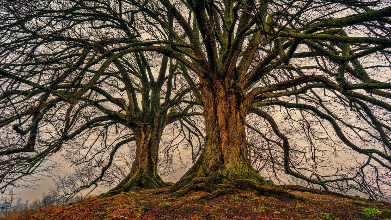 Trees by maka magnolia