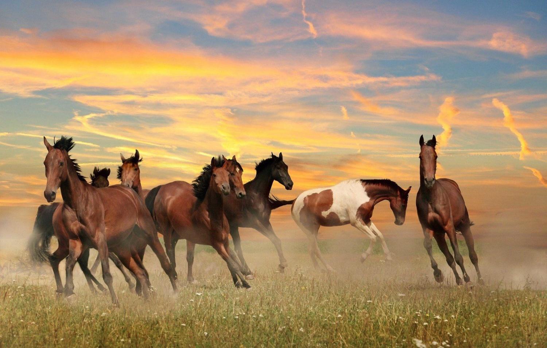 Horses by maka magnolia