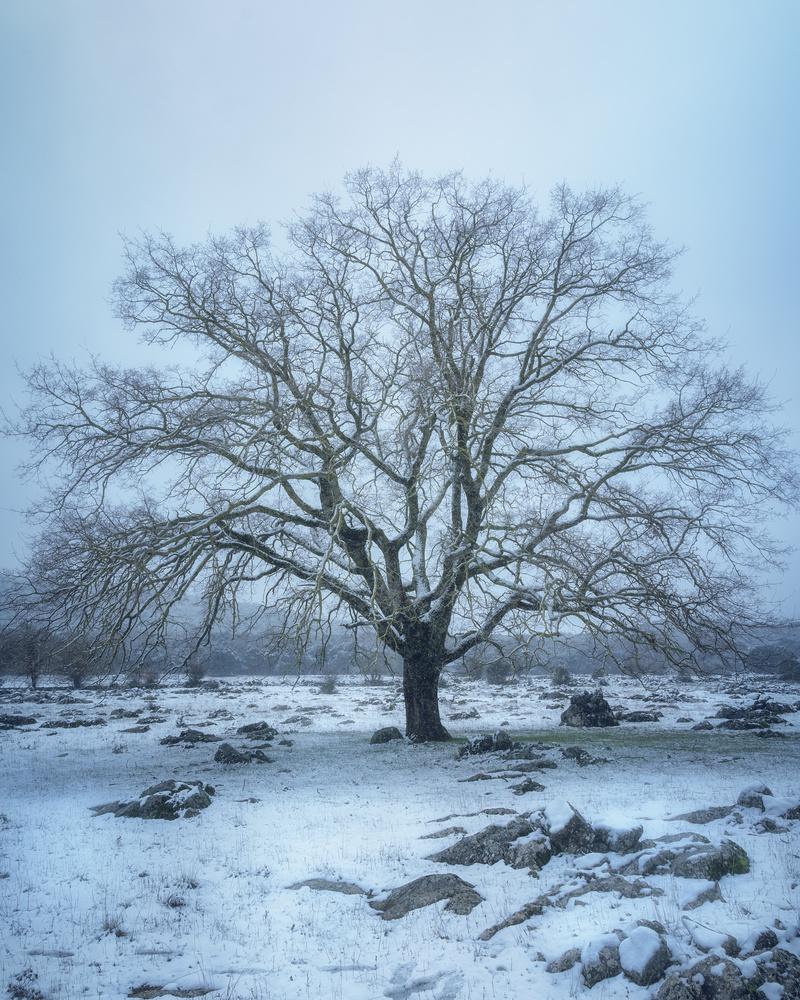 The frozen tree by DaniGviews /Daniel