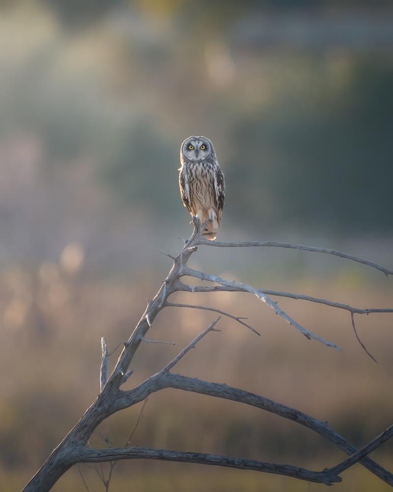 Country owl by DaniGviews /Daniel