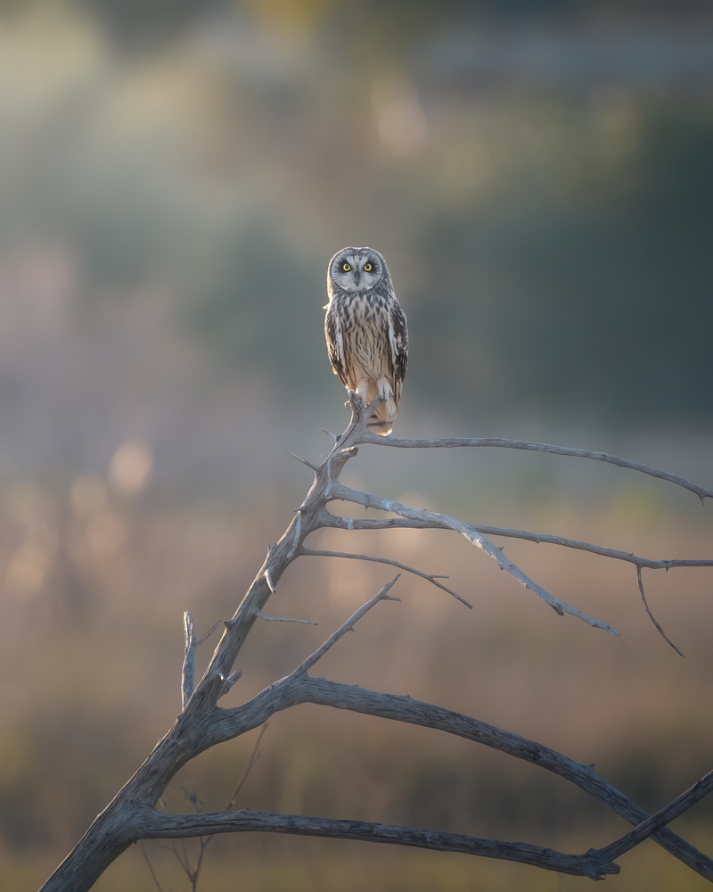 The country owl by DaniGviews /Daniel