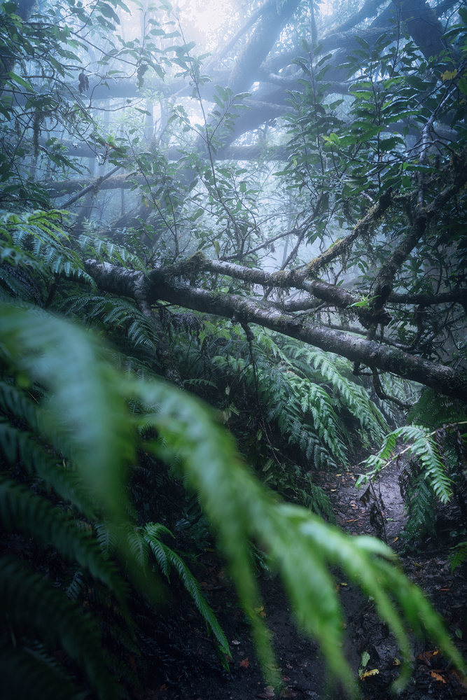 The weed of Anaga by DaniGviews /Daniel