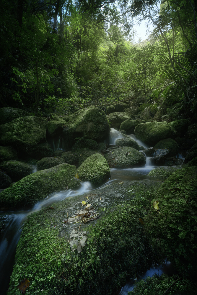 On the way to Wairere Falls, New Zealand by DaniGviews /Daniel