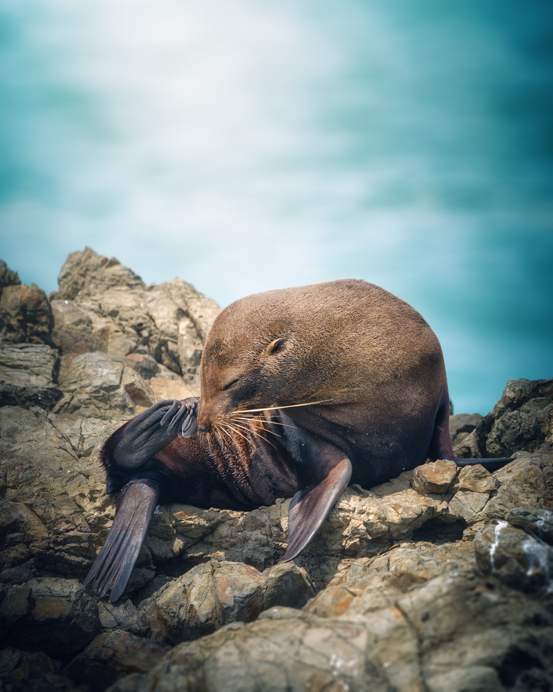 Sea Lion by DaniGviews /Daniel